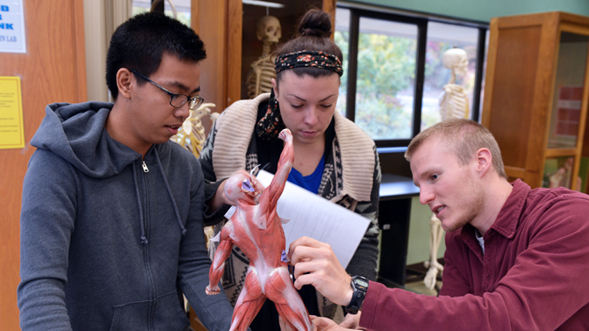 Three students examine an anatomical tool