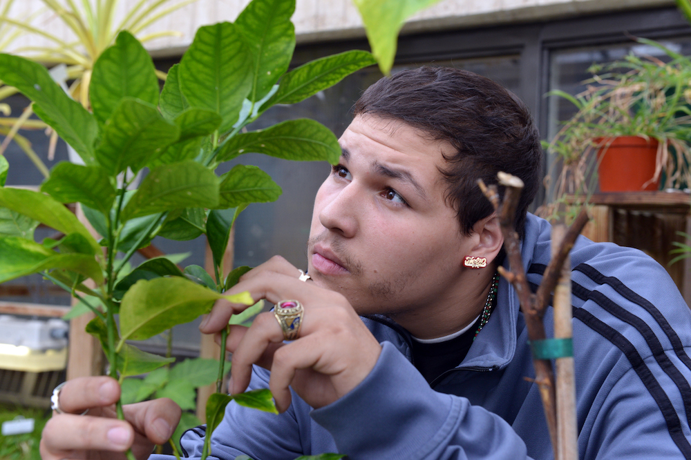 A biology student examines plant leaves in the HCC greenhouse